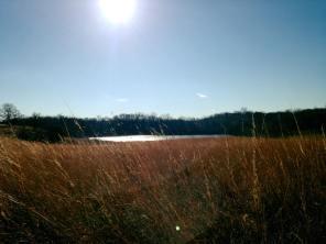 MN Minnesota Native Grass Richardson Nature Center
