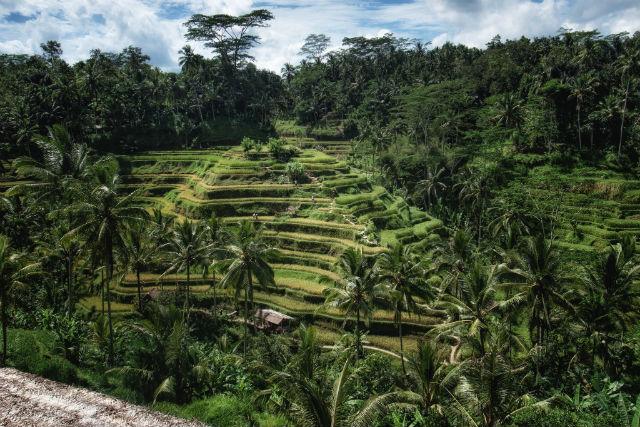 Best Retreat Destinations - 2015 - Bali rice fields