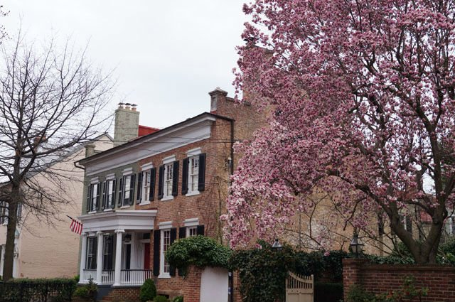 Highlights of Washington DC - Pink blossoms and houses in Alexandria
