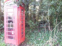 A rare red phone box, nearly hidden in the hedge.