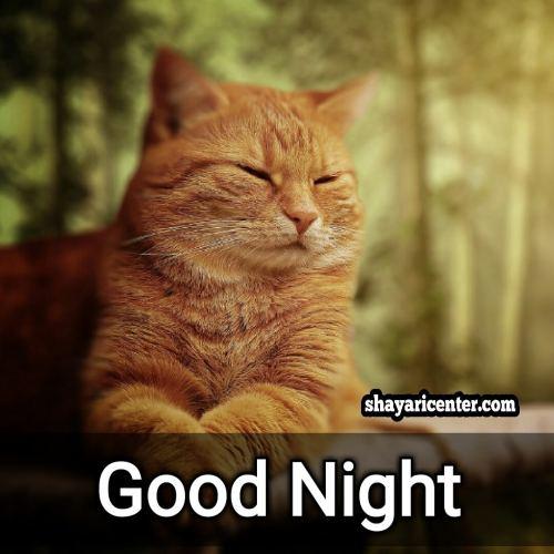 sweet good night shayari image