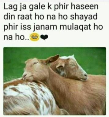 bakra eid funny shayari