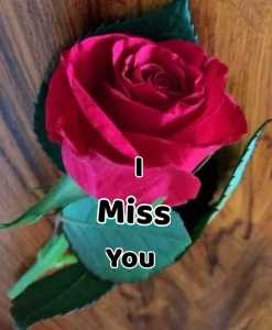 #😢Miss You…😔0 Miss YOU😢Miss You…😔 By sabitri swain on ShareChat – WAStickerApp, Status, Videos and Friends