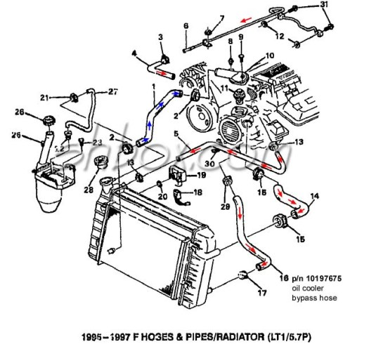 lt1 radiator hose diagram  u2013 periodic  u0026 diagrams science