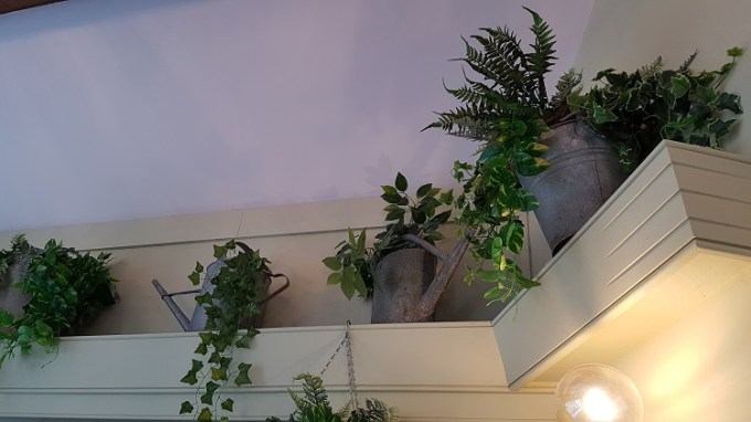 plants on a shelf