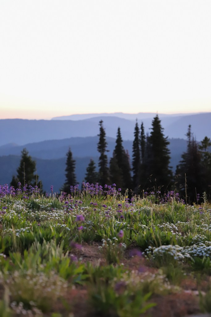 wildflowers and sunset view from Deadwood Mountain Idaho