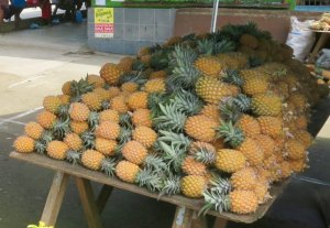 Pineapple season