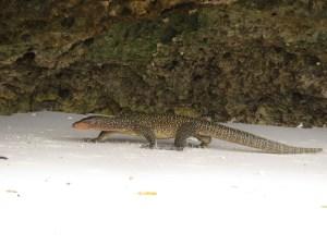 Wayag Iguana