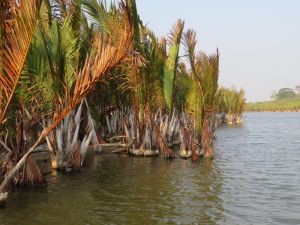 Palm mangroves in TWNC