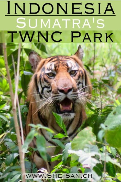 Tambling Wildlife Nature Conservation Park in Sumatra Indonesia