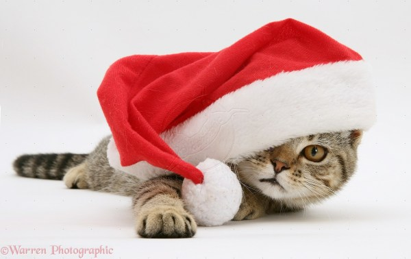 Cat with Santa Hat Christmas