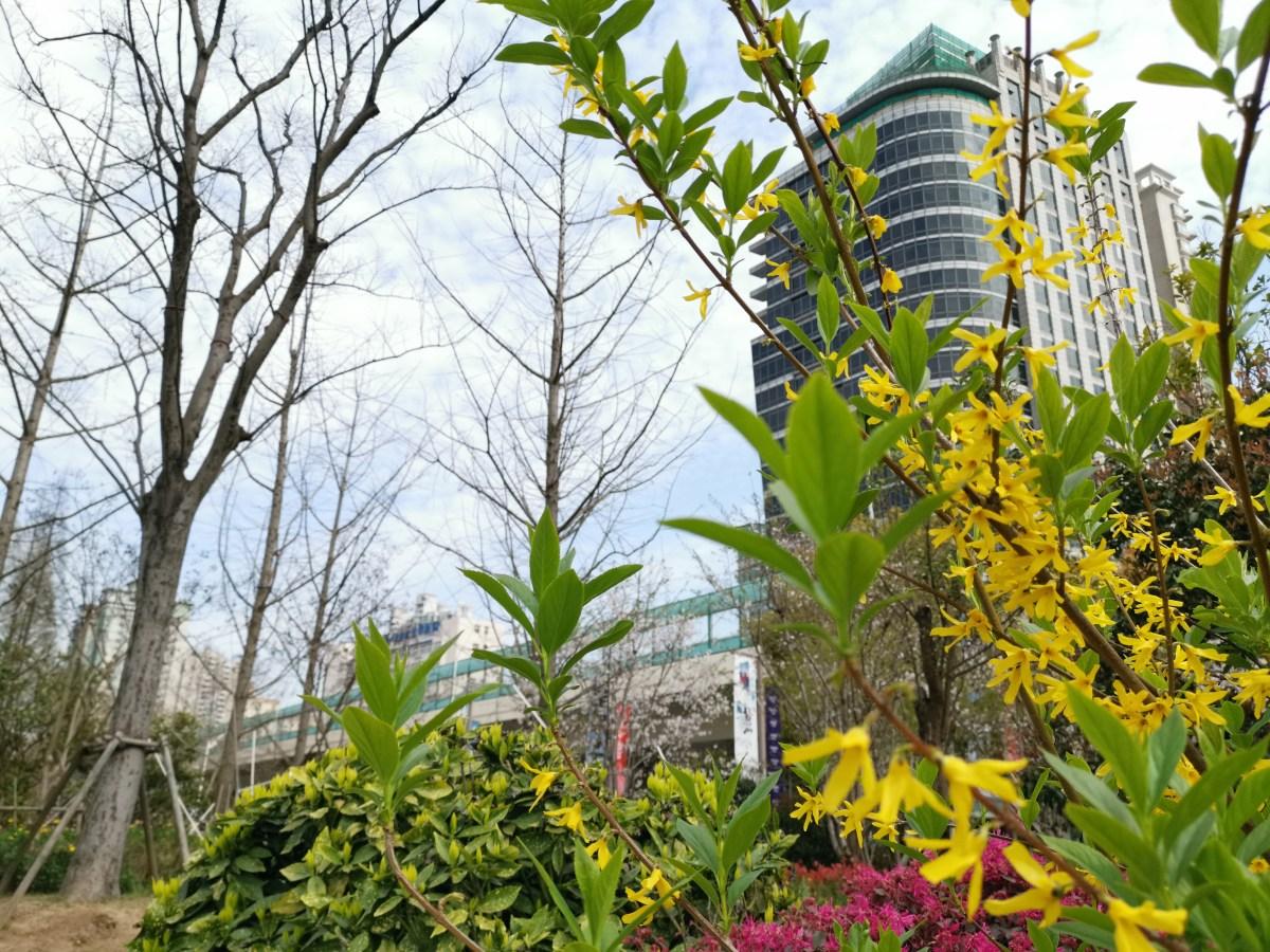 Warum mit dem Zug 1500 Kilometer nördlich fahren, wenn auf Höhe Shanghai gerade der Frühling beginnt?