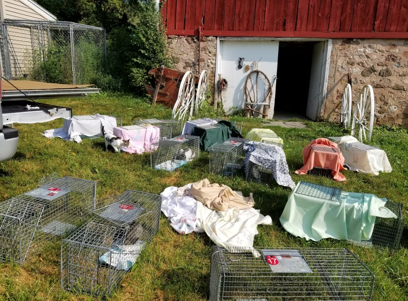 2 Feral Cat Colony Release after TNR, by Terri Ebersole of My Feral Fix