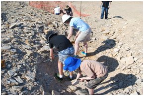 Fossil hunting on the dusk dig