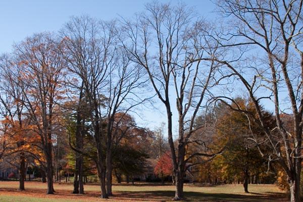 Beautiful Trees in Late Fall