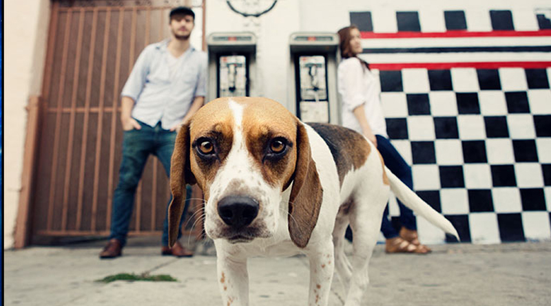 7 Pointers for Posing Pets with Their Owners