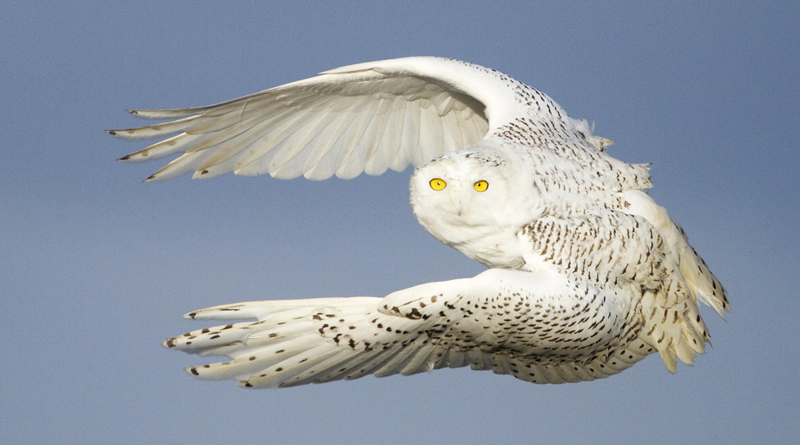 10 Tips for Photographing Birds