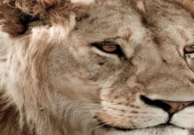 How To Photograph An African Safari
