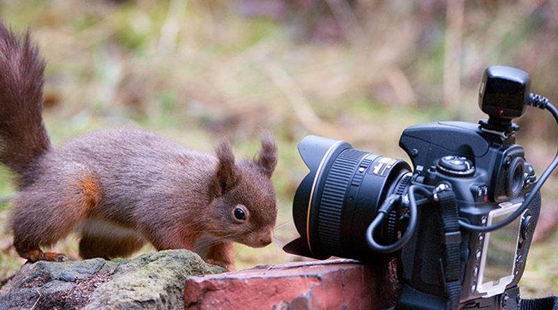 How to Photograph Wildlife with a Wide-angle Lens