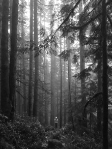 Central Cascades Forest, WA June, 2016