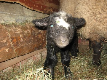 Esther, the day she was born in February 2013