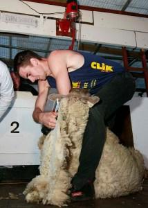 cwp_138clik_shearing