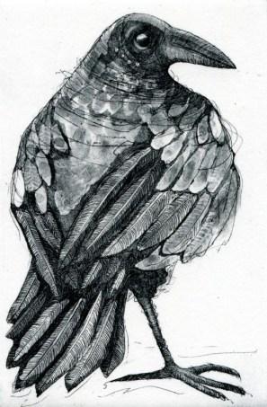 X Old Crow - Sarah Sharpe copy Sarah Sharpe
