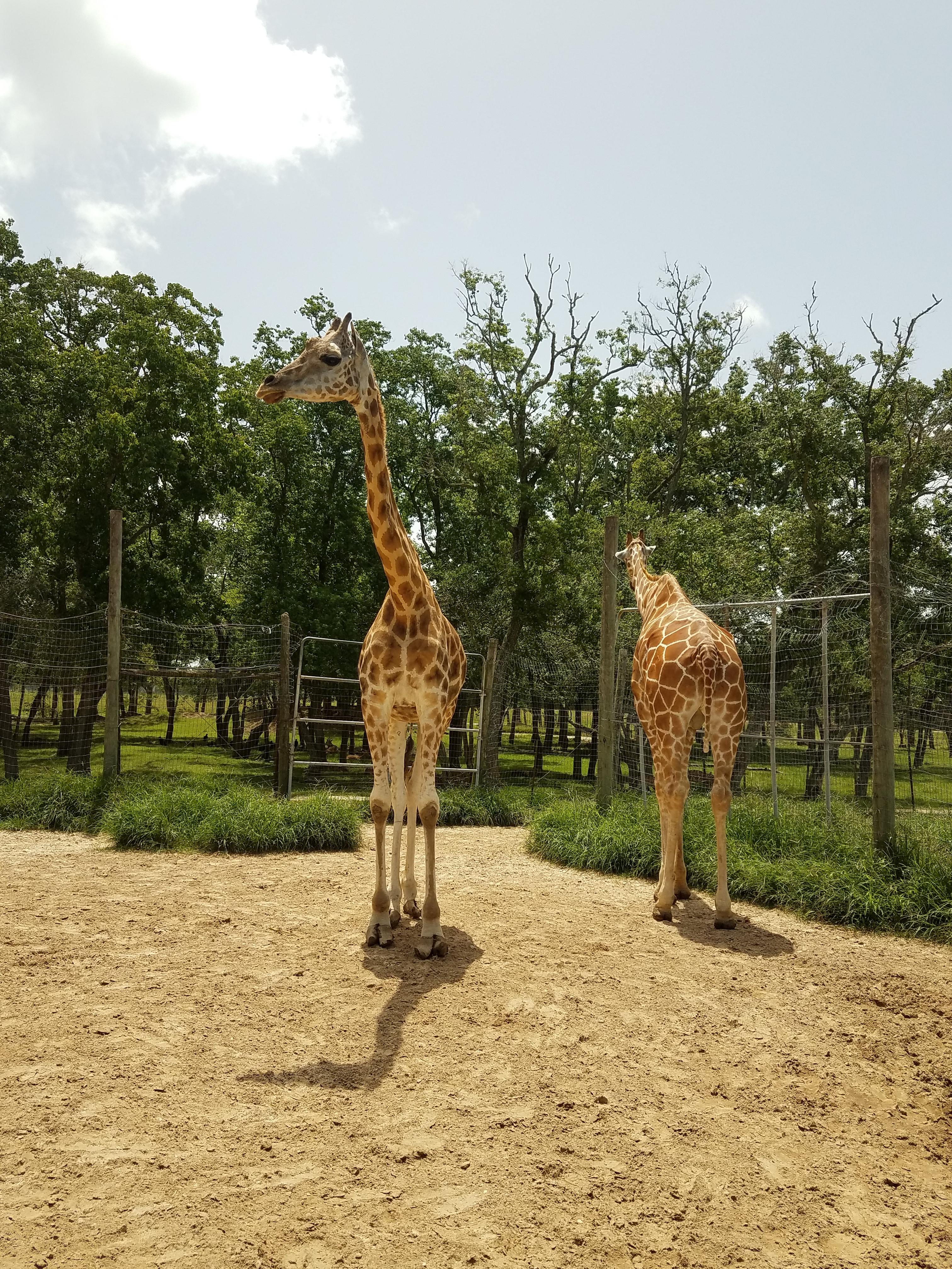 Houston Day Trip – Bayou Wildlife Zoo