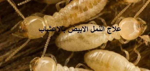 التخلص من النمل الابيض