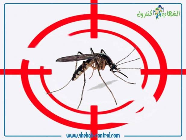 شركة مكافحة الحشرات الطائرة بجدة
