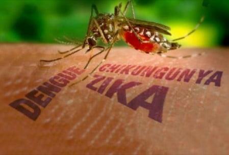 zika-virus-danger