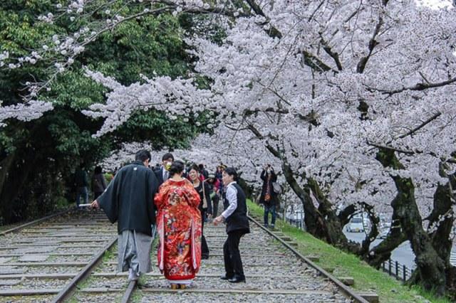 japanbudgettrip-pakej-murah-tokyo-Kyoto-Sakura-