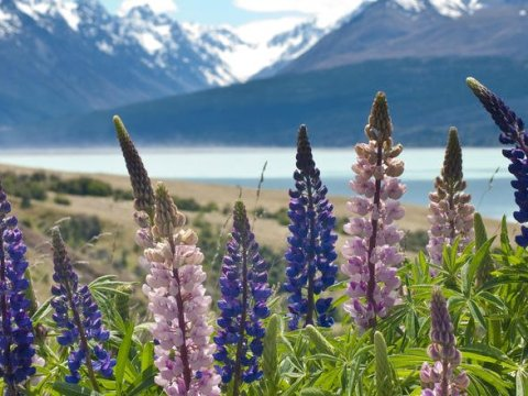 spring-in-new-zealand
