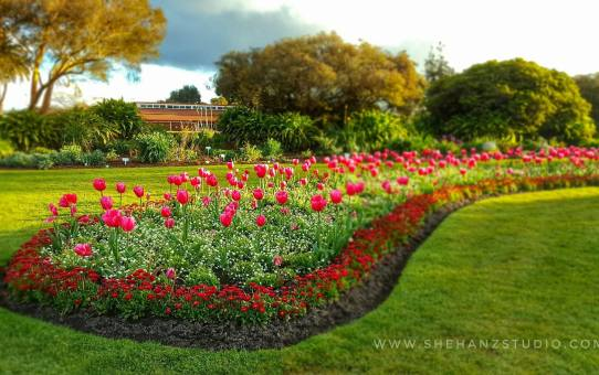 KEMBARA #KBBA9 COSMODERM – IKHLAS TOURS KE NEW ZEALAND | TEMPAT MENARIK DI ROTORUA (SPRING TIME) (PART 4)