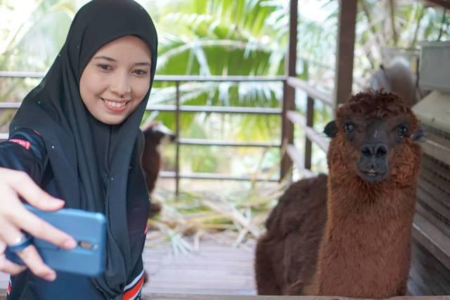 FARM IN THE CITY MALAYSIA, PETTING ZOO TERBAIK UNTUK ANAK-ANAK (31)