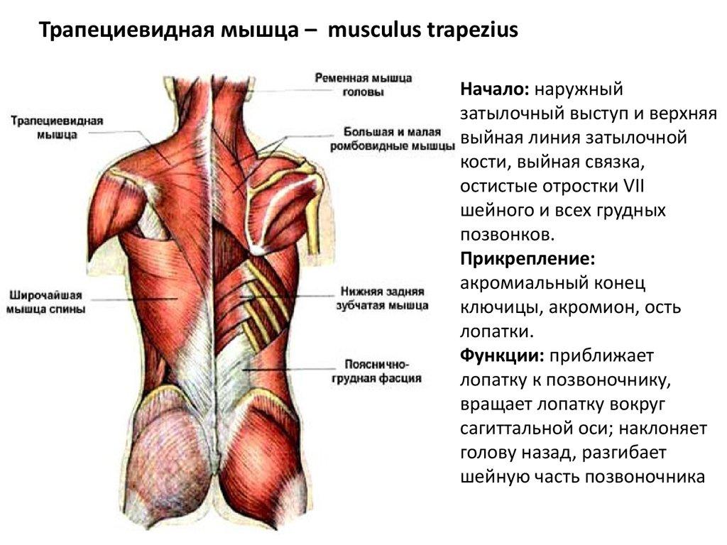 legerősebb gyógyszerek az ízületi fájdalmakhoz