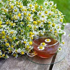 German Chamomile Tea