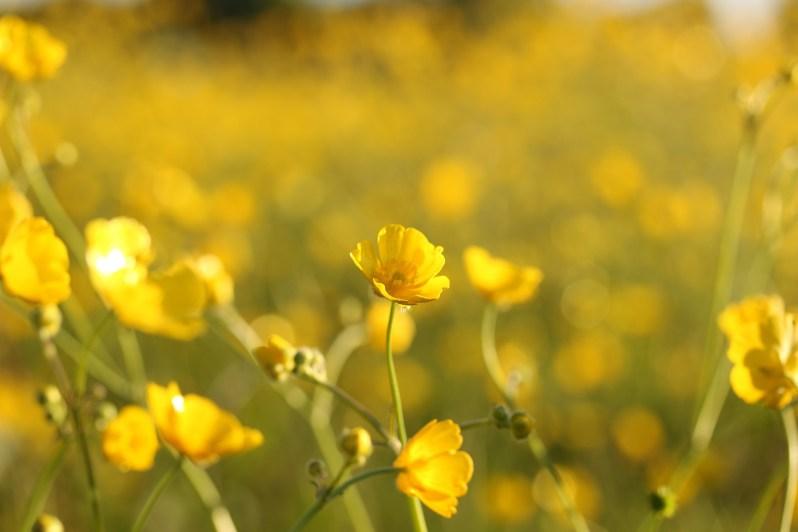 wild-flowers-863437_1920
