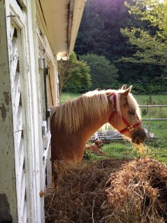 Happy horse in her new home.