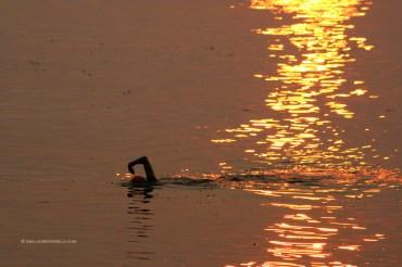 Spanish Banks Sunset Swim 5380 Copyright Shelagh Donnelly