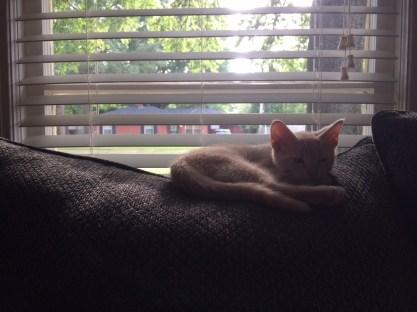 Teague, safe and sleeping