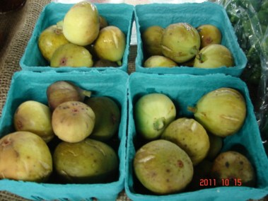 Shelby County Figs