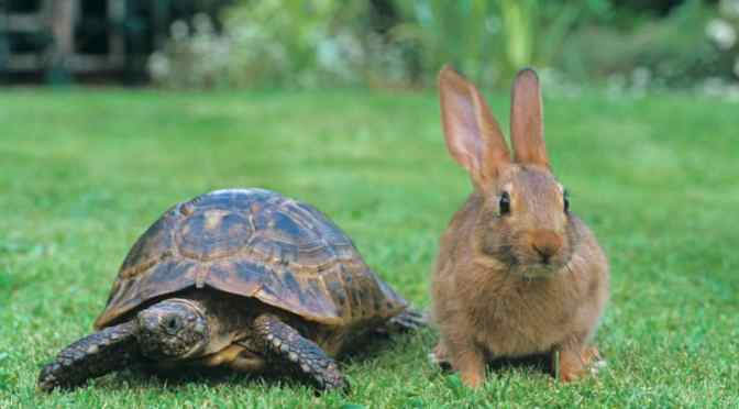 Proper pacing by Tortoise defeats fast start by Hare
