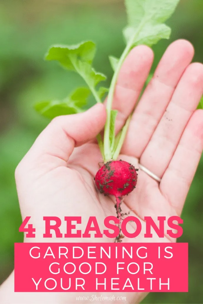 4 Reasons gardening is good for your health from a horticultural therapist #gardening #horticulturaltherapy