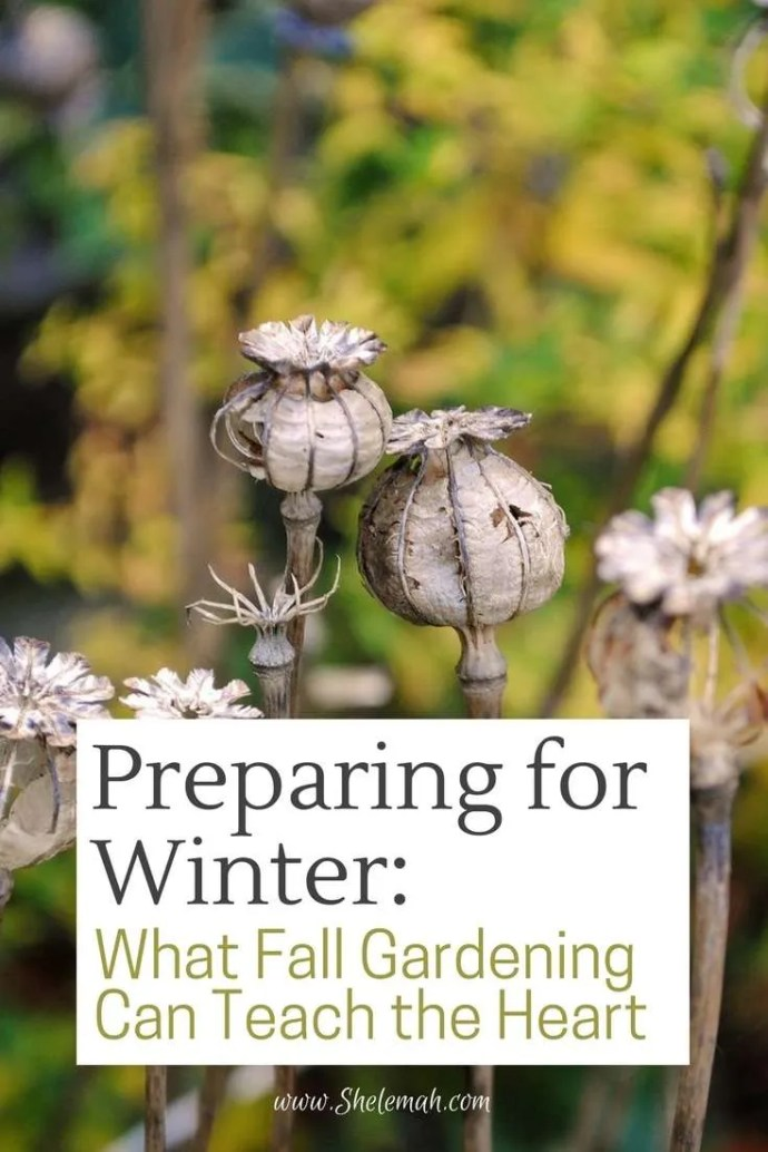 Preparing the heart for winter: Learn from a horticultural therapist what fall gardening can teach our hearts about winter seasons of life. #emotionalhealth #gardening