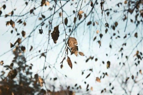 dry leaves in autumn