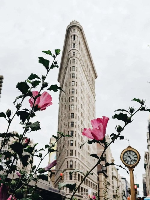 Flatiron Building with Pink flowers