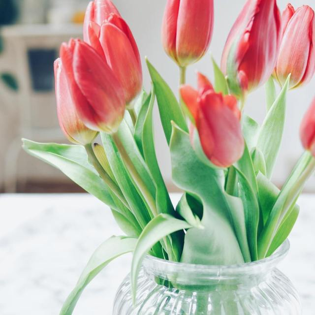 Spring is coming happysunday tulips flowers flowerstagram flowergirl home weekendhellip