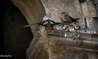 jungvögel-9221