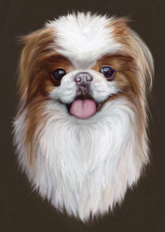 Final dog portrait japanese chin